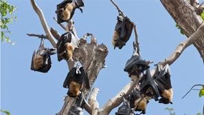 لغز الخفافيش المرعبة في السعودية وتدخل حكومي عاجل