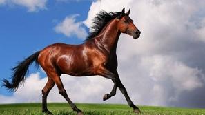 حصان يرى انعكاس صورته في المرآة لأول مرة شاهد ردة فعله