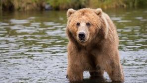 مصوّر يرصد رحلة الحيوانات البرية فوق جسر في الغابة: مشاهد ستبهرك