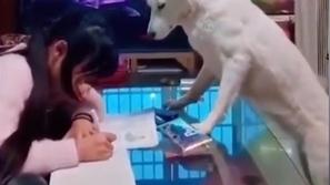 بأمر من الأب.. فيديو طريف لكلبة تراقب طفلة أثناء أدائها واجبات المدرسة
