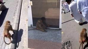 فيديو يذيب القلوب لقرد صغير يصر على الاستماع لخطبة الجمعة وسط المُصلين