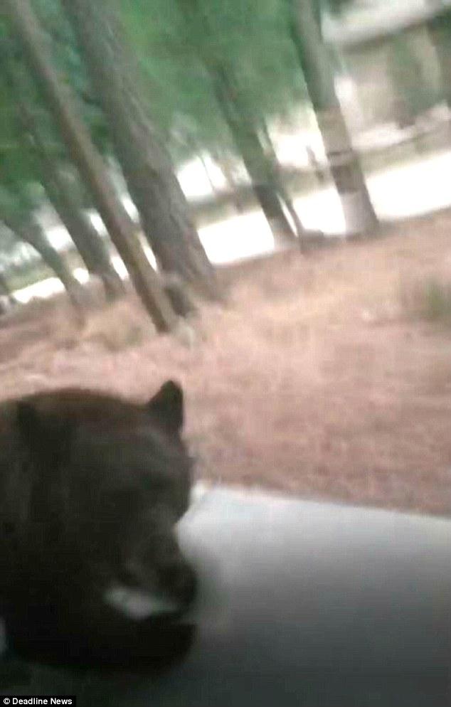 فيديو: خرج ليصور كلبه فهاجمه هذا الحيوان الضخم!